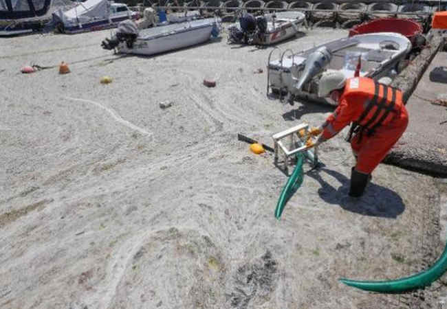 Marmara Denizi'nde Deniz salyası temizliği başlatildı