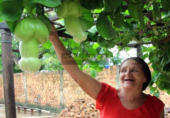 Dünyanin en ilginc ve hayatinizda gormediyiniz sebzeler